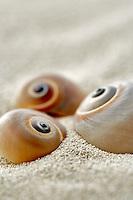 Snail seasheels and beach sand.