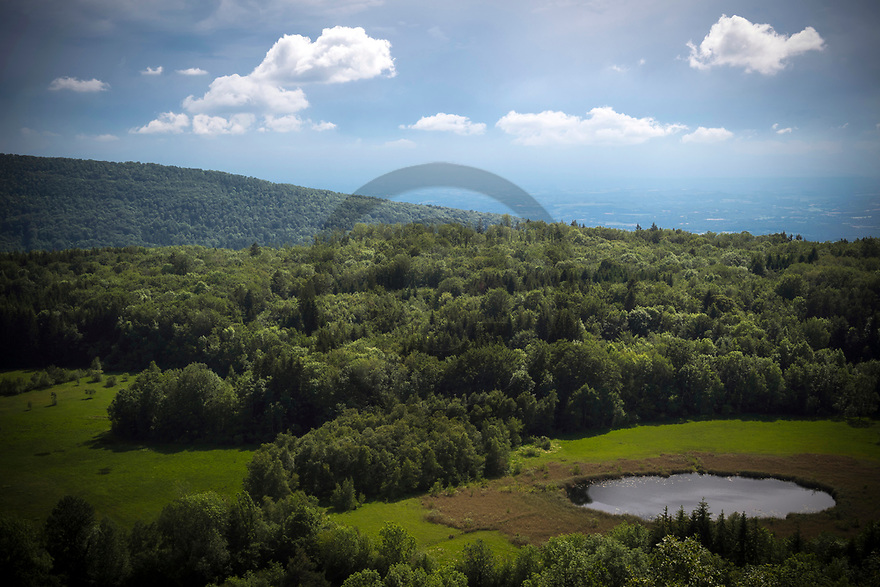 20/06/19 - CERIN - AIN - FRANCE - Reserve naturelle de la Tourbiere de Cerin - Photo Jerome CHABANNE