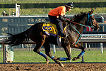 ARCADIA, CA  OCTOBER 25: Breeders' Cup Classic entrant Mongolian Groom, trained by Enebish Ganbat, exercises in preparation for the Breeders' Cup World Championships at Santa Anita Park in Arcadia, California on October 25, 2019.  (Photo by Casey Phillips/Eclipse Sportswire/CSM)