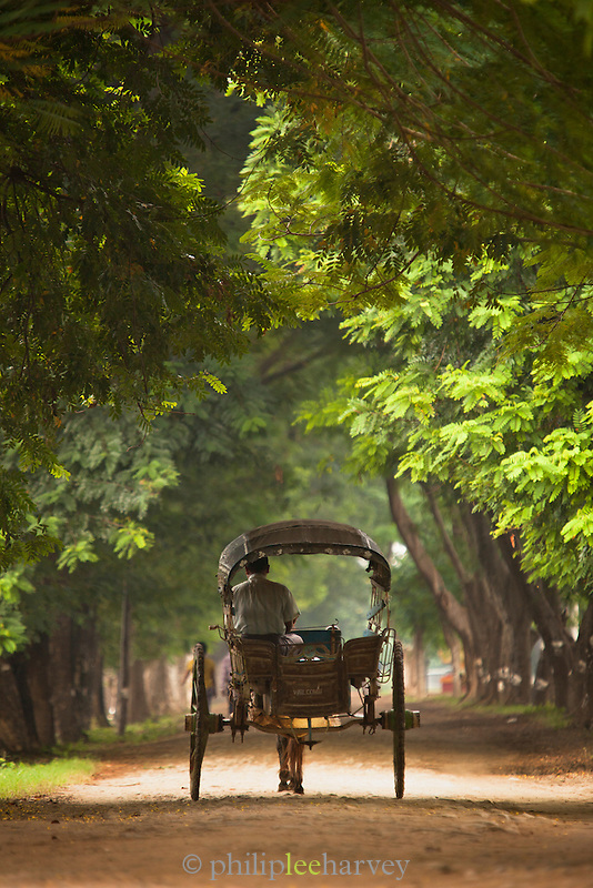 A donkey and cart travel down a road in the acient city of Ava, in Myanmar
