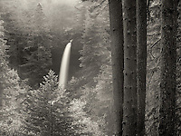 North Falls with fog and fall color. Silver Falls State Park, Oregon