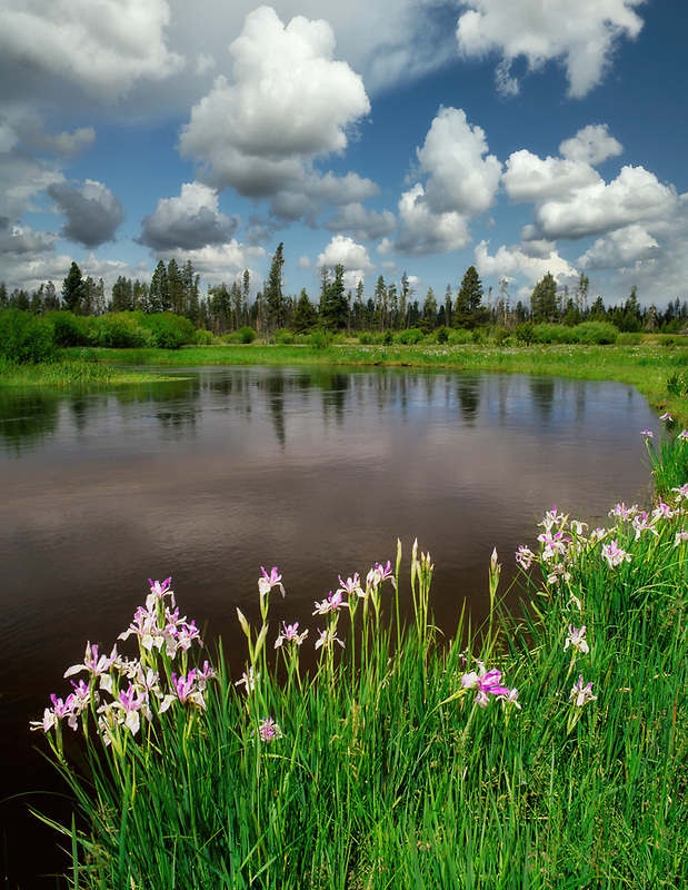 Upper Deschutes River with Iris. Deschutes National Forest. Oregon.