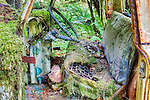 An abandon truck decays in the rain forest of the Olympic Peninsula.  Quinault Rain Forest, Olympic National Forest, Washington State