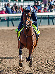 LOUISVILLE, KENTUCKY - MAY 02: Practical Joke, owned by Klaravich Stables, Inc. and William H. Lawrence and trained by Chad Brown, exercises in preparation for the Kentucky Derby at Churchill Downs on May 2, 2017 in Louisville, Kentucky. (Photo by Jesse Caris/Eclipse Sportswire/Getty Images)