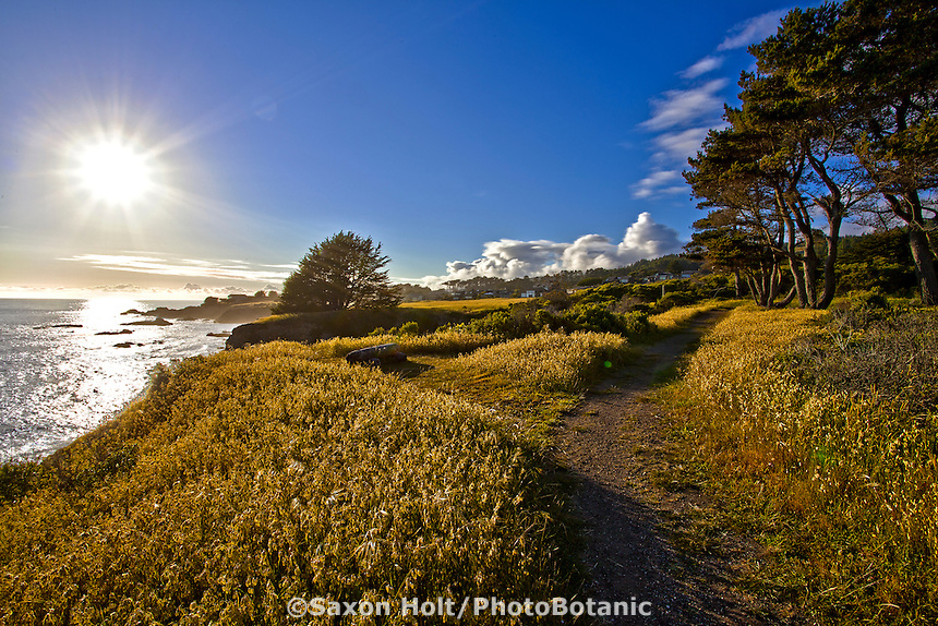The Sea Ranch - late afternoon Pacific Ocean view from Bluff trail at Pebble Beach access