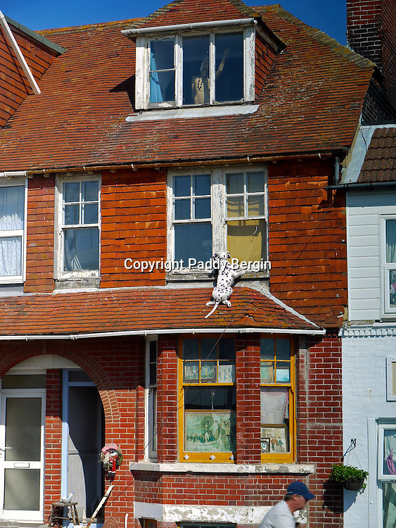 A terraced house in Littlehampton with a Dalmation dog apparently climbing the outside.<br /> <br /> Stock Photo by Paddy Bergin