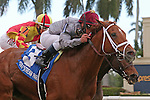 HALLANDALE BEACH, FL - JANUARY 14:  #3 Sandiva (IRE) with jockey Javier Castellano on board wins the Marshua's River G3 Stakes at Gulfstream Park on January 14, 2017 in Hallandale Beach, Florida. (Photo by Liz Lamont/Eclipse Sportswire/Getty Images)