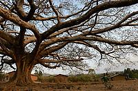 ETHIOPIA Province Benishangul-Gumuz, town Debate , large tree / AETHIOPIEN, Provinz Benishangul-Gumuz, Stadt Debate, großer Baum