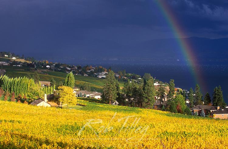 Canada, BC, Okanagan Valley, Rainbow over Vineyard