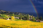 Canada, BC, Okanagan Valley, Rainbow over Vineyard