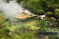 Wai-O-Tapu Geyser in Wai-O-Tapu Thermal Wonderland, Rotorua Region, Central Plateau, North Island, New Zealand, NZ