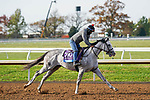 November 5, 2020: Next, trained by trainer Wesley A. Ward, exercises in preparation for the Breeders' Cup Juvenile at Keeneland Racetrack in Lexington, Kentucky on November 5, 2020. Dan Heary/Eclipse Sportswire/Breeders Cup/CSM