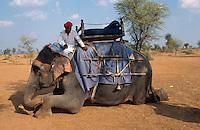 Indien, Rajasthan, Reitelefant bei Jaipur.