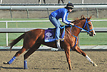 Brown Almighty, trained by Tim Ice,exercises in preparation for the upcoming Breeders Cup at Santa Anita Park on October 31, 2012.