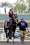 ARCADIA, CA - OCT 31: Green Mask, owned by Saeed Almaddah Abdullah and trained by Brad Cox, walks through the paddock on the way to the track to exercise in preparation for the Breeders' Cup Turf Sprint at Santa Anita Park on October 31, 2016 in Arcadia, California. (Photo by Zoe Metz/Eclipse Sportswire/Breeders Cup)