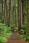 Hikers on Sol Duc Falls Trail through Douglas Fir trees forest, Olympic National Park, Washington..#2410-7614