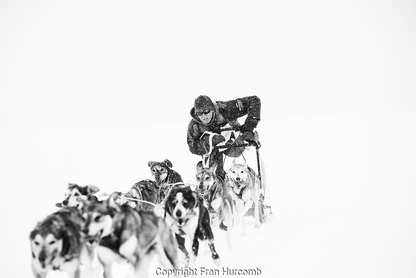 Dog team completing race in snow storm