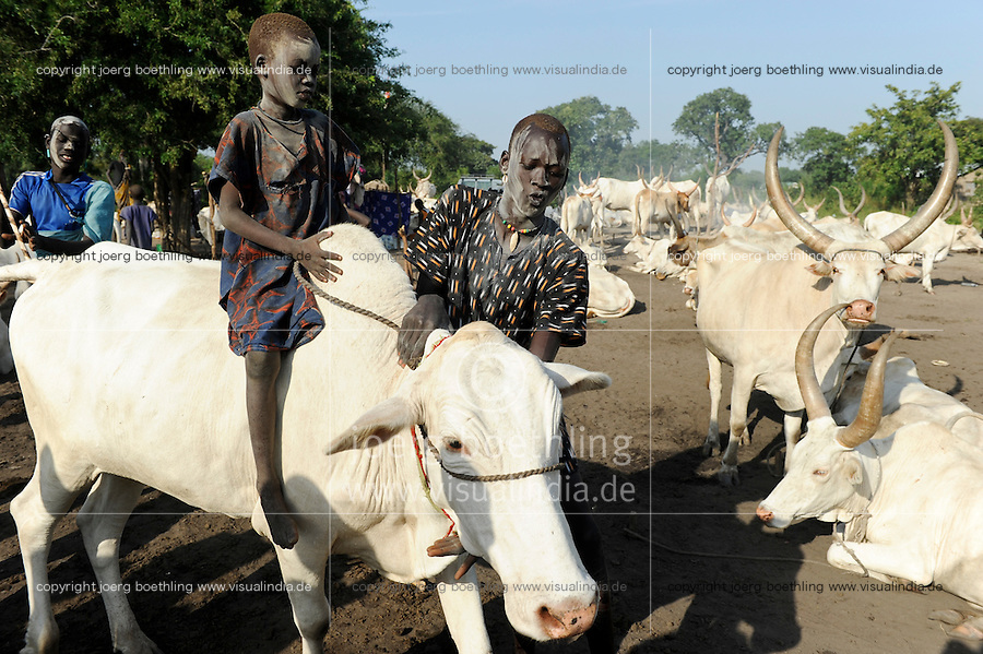 SOUTH SUDAN Bahr al Ghazal region , Lakes State, village Yeri cattle camp near Rumbek, Dinka boy riding cow / SUED-SUDAN  Bahr el Ghazal region , Lakes State, Dorf Yeri, Dinka mit Zebu Rindern im cattle camp bei Rumbek , Junge reitet Kuh