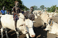 SOUTH SUDAN Bahr al Ghazal region , Lakes State, village Yeri cattle camp near Rumbek, Dinka boy riding cow / SUED-SUDAN  Bahr el Ghazal region , Lakes State, Dorf Yeri, Dinka mit Zebu Rindern im cattle camp bei Rumbek , Junge reitet Kuh