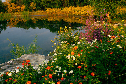 Rural lake in summer with blooming flowers around reflecting evening light
