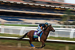 DEL MAR, CA - NOVEMBER 02: Oscar Performance, owned by Amerman Racing, LLC and trained by Brian A. Lynch, exercises in preparation for Longines Breeders' Cup Turf at Del Mar Thoroughbred Club on November 2, 2017 in Del Mar, California. (Photo by Jamey Price/Eclipse Sportswire/Breeders Cup)