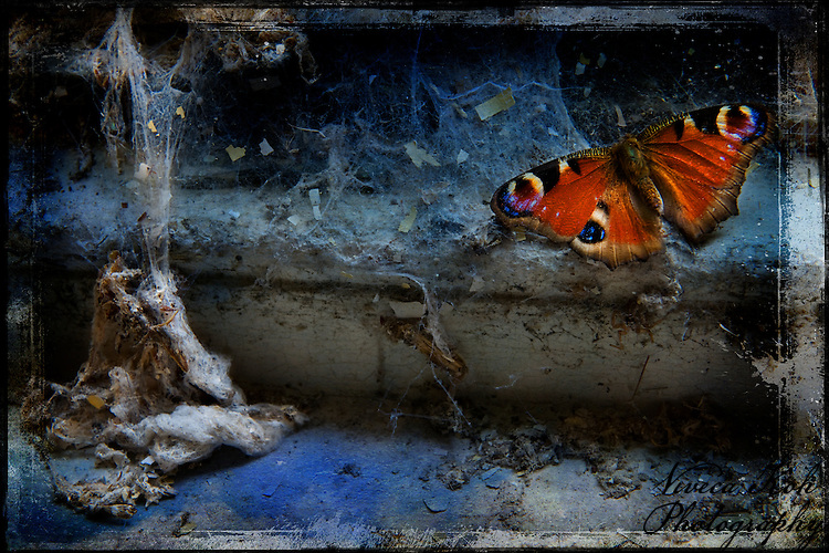 Butterfly on a decaying windowsill