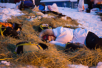 Melissa Owens sleeps in straw with dog team early Saturday morning in Ruby during Iditarod 2008