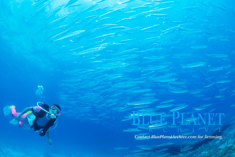 scuba diver and schooling fish, Thailand, Indian Ocean