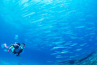 scuba diver and schooling fish, Thailand, Indian Ocean
