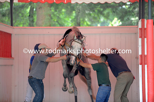 Mischief lives down to his name at the 2009 Saratoga Open House.