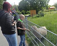 Besucher füttern die Schafe im Haustierpark Werdum - Werdum 24.07.2020: Haustierpark Werdum