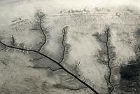4415/Eis: EUROPA, DEUTSCHLAND, HAMBURG 22.01.2006 Eis an der Elbe. Süsswasserwatt, Priel, bei Ebbe laeuft das Wasser aus dem Suesswasserwatt im Muehlenberger Loch ab. Bizarre Form.