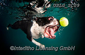 REALISTIC ANIMALS, REALISTISCHE TIERE, ANIMALES REALISTICOS, dogs, paintings+++++SethC_320B2782rev,USLGSC09,#A#, EVERYDAY ,underwater dogs,photos,fotos ,Seth