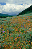 Paintbrush and Anthracite Range<br />   from Ohio Creek Valley<br /> Gunnison National Forest<br /> Rocky Mountains,  Colorado