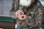 Banding an Eastern phoebe