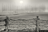 Fence, pasture and Cook Pines in fog with barn, Stables at Ko'ele. Lanai, Hawaii