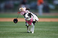 Cowboy Monkey Rodeo performs during a Wilmington Blue Rocks doubleheader against the Frederick Keys on May 14, 2017 at Daniel S. Frawley Stadium in Wilmington, Delaware.  Wilmington defeated Frederick 10-2.  (Mike Janes/Four Seam Images)