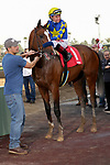ARCADIA, CA  JANUARY 4: #1 Authentic, ridden by Drayden Van Dyke in the winners circle after winning the Sham Stakes (Grade lll) on January 4, 2020 at Santa Anita Park in Arcadia, CA.  (Photo by Casey Phillips/Eclipse Sportswire/CSM)