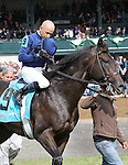 October 04, 2014: No Nay Never and jockey Mike Smith win the 18th running of the Woodford Presented by Keeneland Select Grade 3 $150,000 at Keeneland Racecourse for owner Susan Magnier, Michael Tabor, Derrick Smith and Ice Wine Stable and trainer Wesley Ward.  Candice Chavez/ESW/CSM