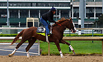 LOUISVILLE, KY -APR 25: Kentucky Derby hopeful Free Drop Billy trains for the Kentucky Derby at Churchill Downs, Louisville, Kentucky. (Photo by Mary M. Meek/Eclipse Sportswire/Getty Images)