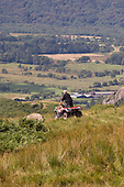 A farmer uses a quad bike on his farm on the edge of the Snowdonia National Park in North Wales