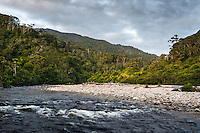 Kohaihai River and native forest near Karamea, Kahurangi National Park, Buller Region, West Coast, New Zealand, NZ