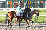 NEW ORLEANS, LA - FEBRUARY 25: Sorry Erik, ridden by Kent J. Desormeaux, wins the Risen Star. on Risen Star Stakes Day at Fair Grounds Race Course on February 25, 2017 in New Orleans, Louisiana. (Photo by Jarrod Monaret/Eclipse Sportswire/Getty Images)
