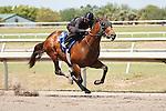 #72Fasig-Tipton Florida Sale,Under Tack Show. Palm Meadows Florida 03-23-2012 Arron Haggart/Eclipse Sportswire.