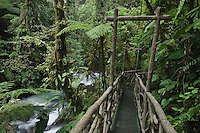 Trail in Cloudforest, La Paz Waterfall Gardens, Central Valley, Costa Rica, Central America