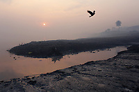 A bird takes flight at dawn over a polluted water channel that feeds into the Ganges River at Kanpur.