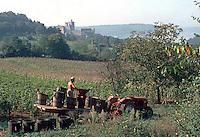 Europe/France/Aquitaine/24/Dordogne/Env de Bergerac: Vendanges à Château Lavaud AOC Bergerac [Non destiné à un usage publicitaire - Not intended for an advertising use]