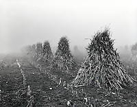"""""""Amish Harvest""""<br /> Rural Carroll County, Indiana<br />       <br />      Images of yesteryear emerge from the early morning fog in rural Carroll County, Indiana.  An Amish family prepared their corn harvest by shocking it in late November.   This is one of the most well-known ways of taking in corn.  Shocking prevents the corn ears from falling on the ground and absorbing moisture.  The shocks of corn appear to be receding into the acreage near the creek."""