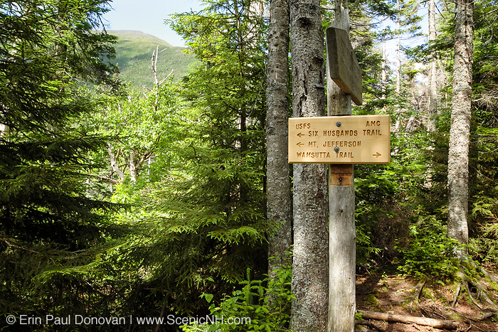 Six Husbands Trail in Thompson and Meserve's Purchase in the Great Gulf Wilderness in the Presidential Range of the New Hampshire White Mountains during the summer months.