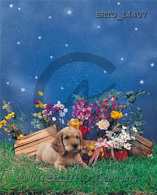 Alfredo, ANIMALS, photos, dog, flowers, meadow(BRTO14407,#A#) Hunde, perros